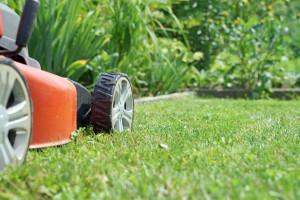 Rasenmäher auf dem Rasen